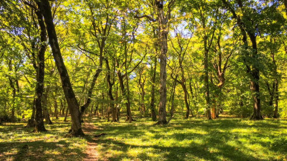 Sokan vártak erre a bejelentésre: így újulhatnak meg a magyar erdők