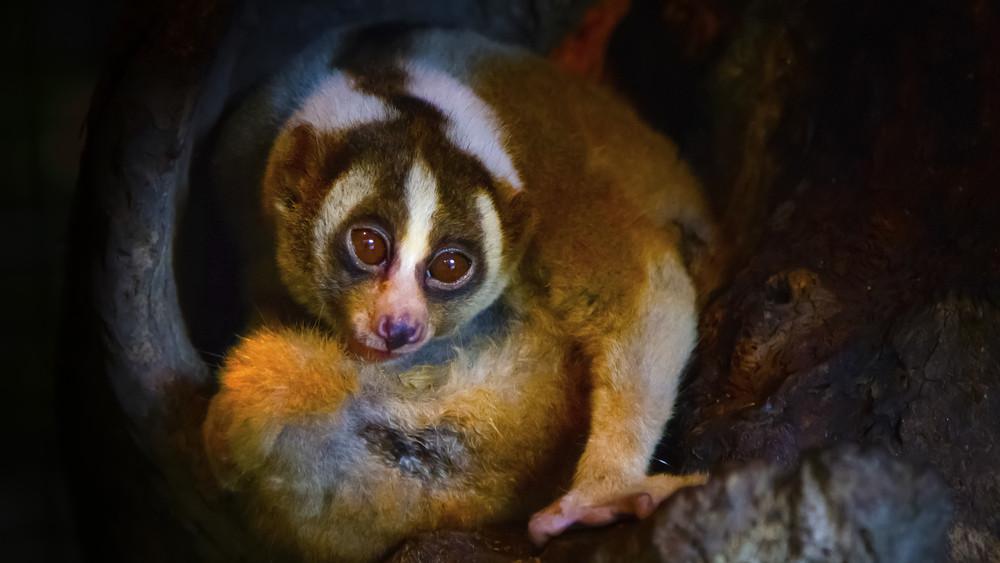 Ma lesz az Állatkertek Éjszakája: itt vannak a programok!
