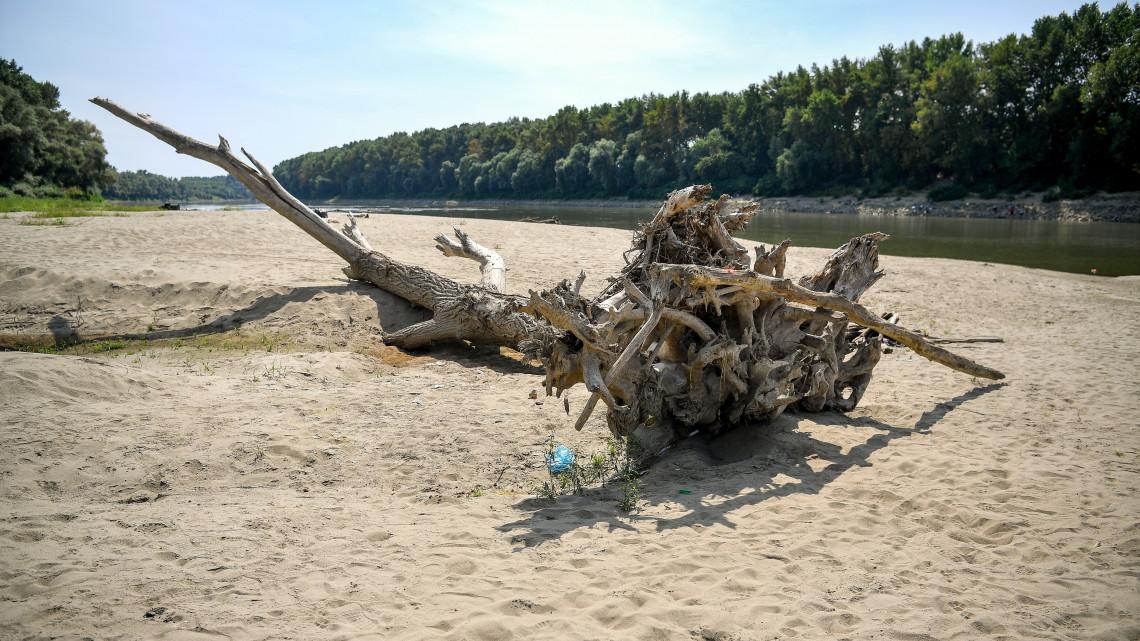Apokaliptikus fotók: szomorú látványt nyújt a kiszáradt Tisza