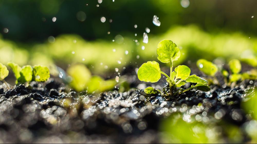 Jövőre versenyképesebb lehet a magyar mezőgazdaság: ez az újítás tehet róla