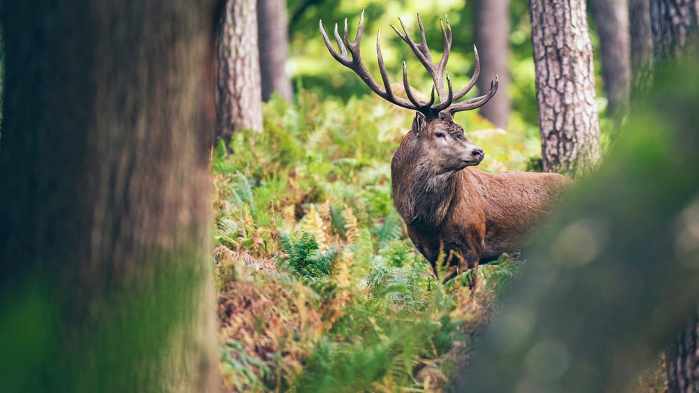 Kirándulók, figyelem: erdőlátogatási korlátozás lépett érvénybe!