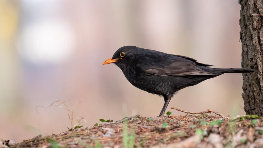 Veszélyben lehet a madárállomány: több száz ezerrel csökkent a költőpárok száma