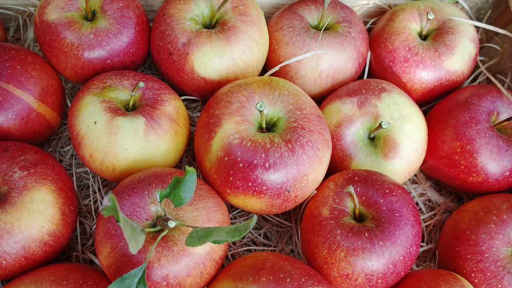 Itt a bizonyíték: ezért egészségesebb bio almát enni