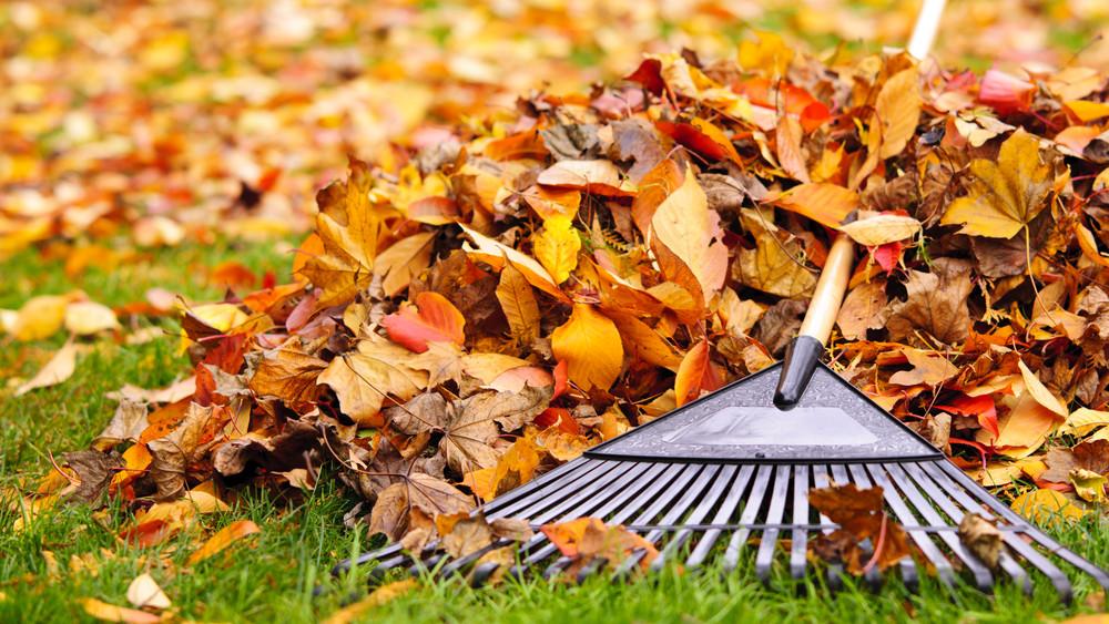 Így készítsük fel kertünket az őszre: mutatjuk a lépéseket!
