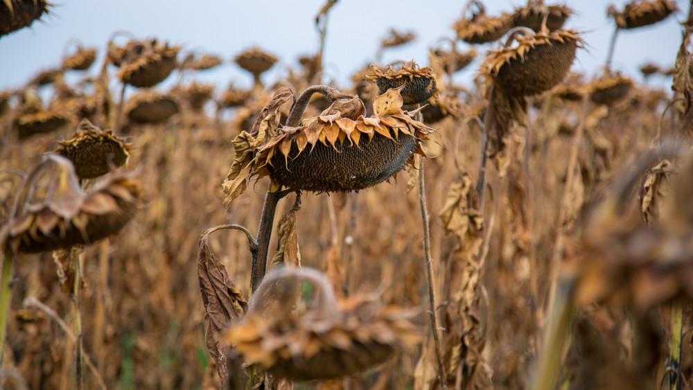 Elkezdődött az őszi munka a földeken: mutatjuk, milyen lesz a termés!