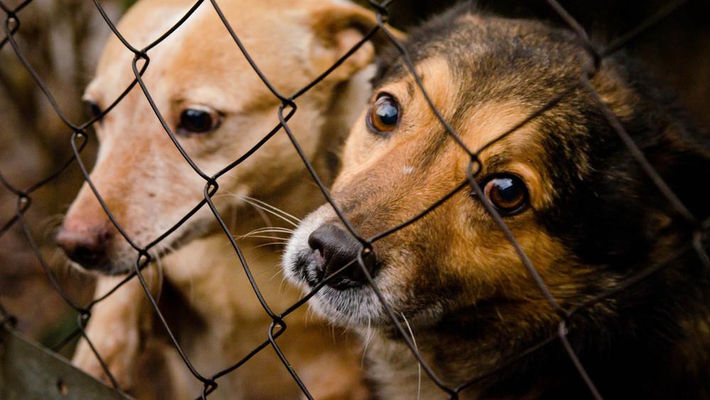 Súlyos pénzihány a kutyamenhelyeken: így segítheted őket