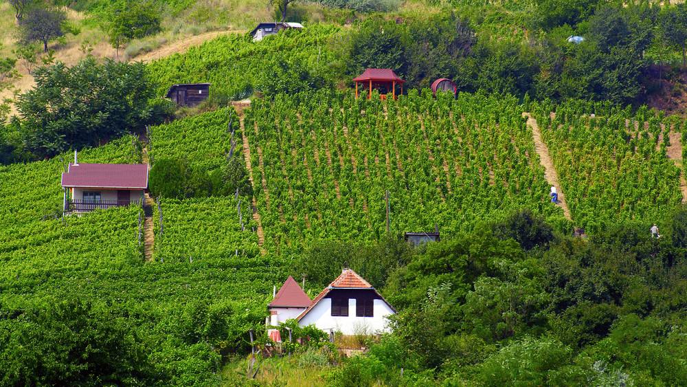 Milliárdok segítik a borászatokat: felpöröghet a magyar borok hírneve