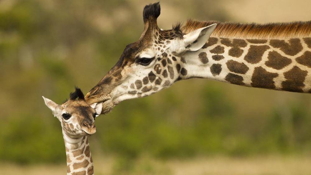 Tragédia a veszprémi állatkertben: nem tudták megmenteni az újszülöttet