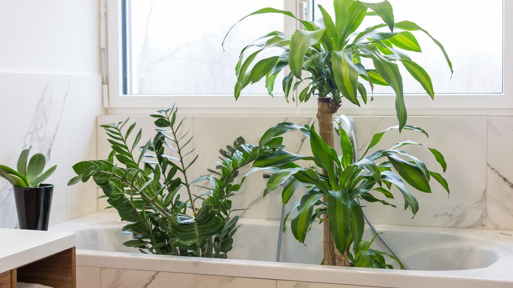 Mikor vidd be a növényeket a lakásba? Ezek a legfontosabb tudnivalók