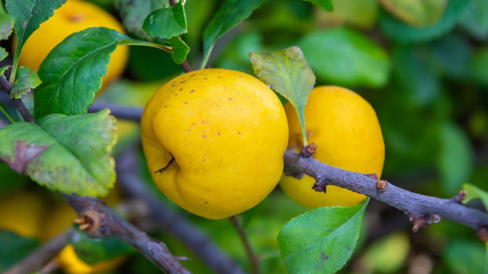 Őszi vitaminbomba: kevesen fogyasztják, pedig remek immunerősítő