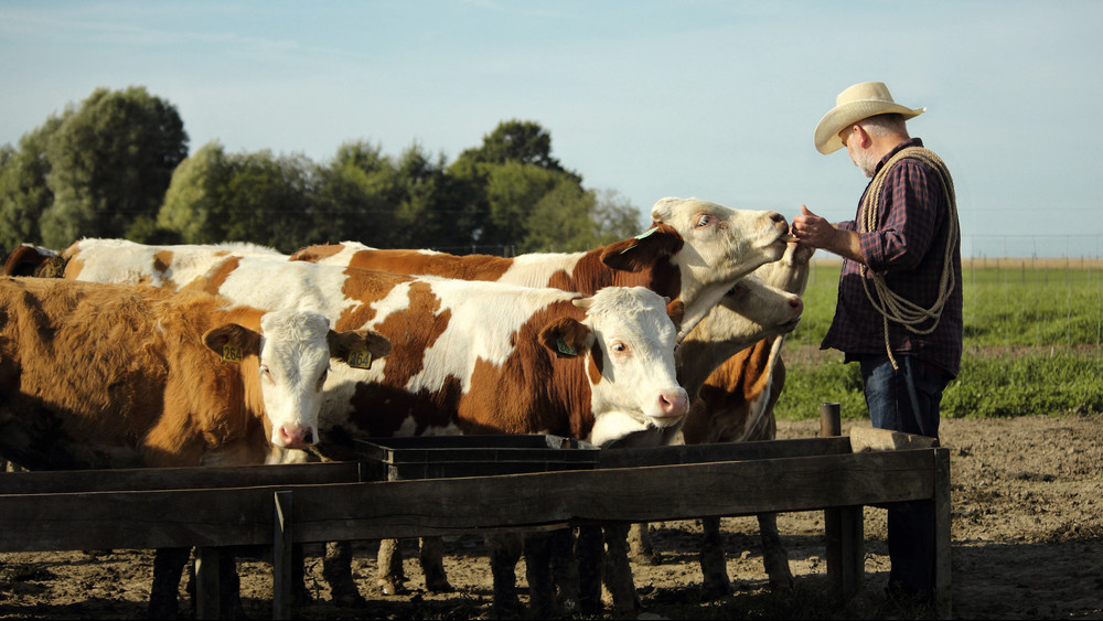 Pénzeső hullott a magyar állattenyésztőkre: rengeteg támogatást kapnak