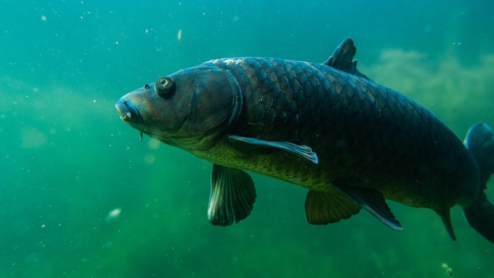 Kifogták a gigahalat: a 44 kilós szörnyeteg láttán sírva fakadt a horgász