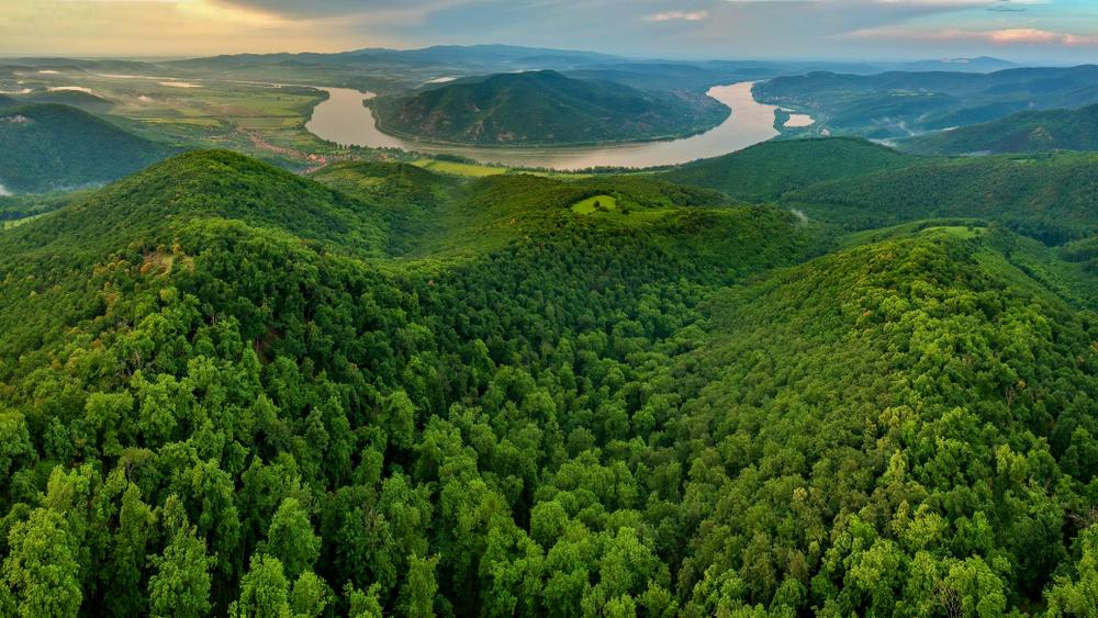 Egyre több az erdőgazdálkodás, mégis pusztulnak a magyar erdők