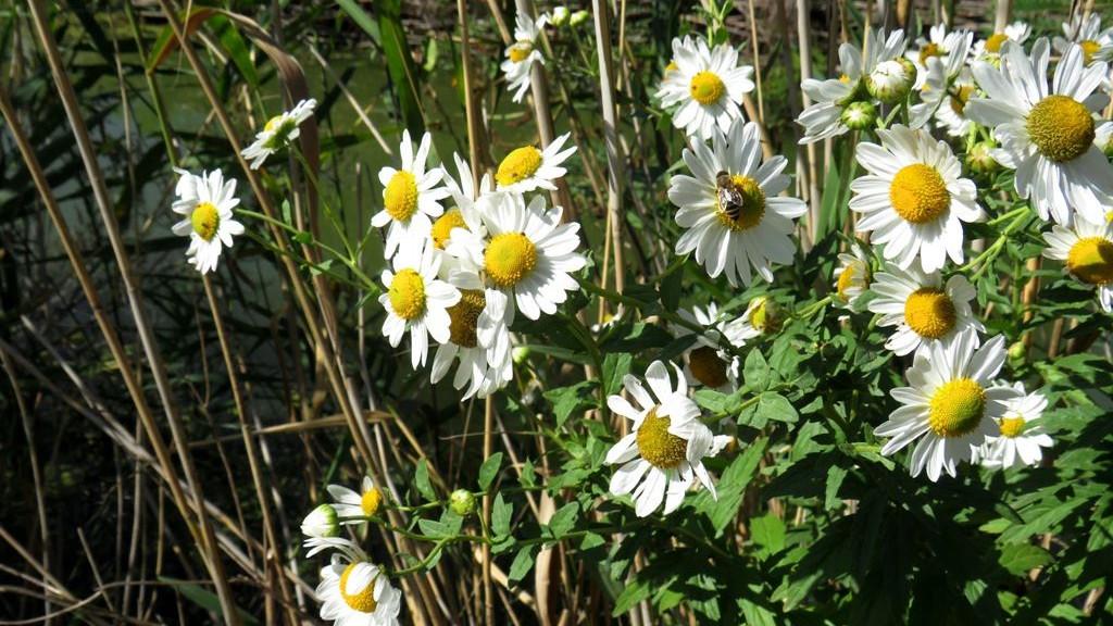 Durva bírságot fizethetsz, ha leszakítod ezt a növényt: most virágzik itthon!
