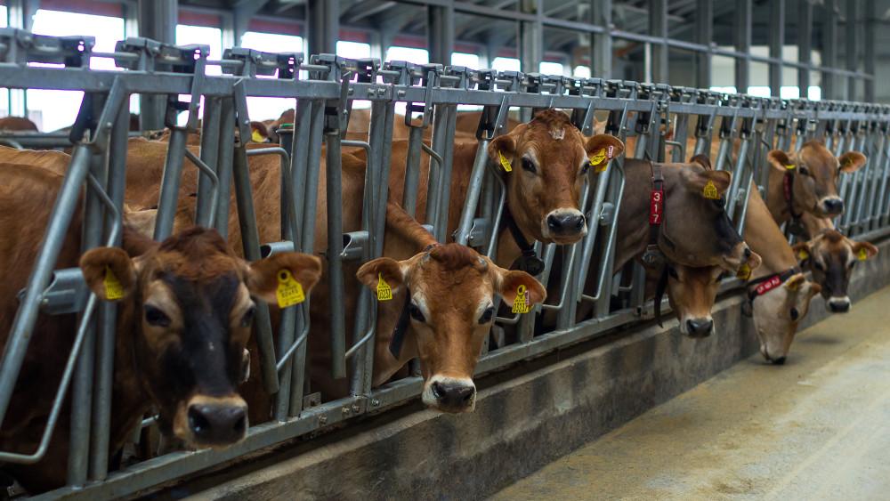 Elindult a visszaszámlálás: meg vannak számlálva a hús- és tejfogyasztás napjai