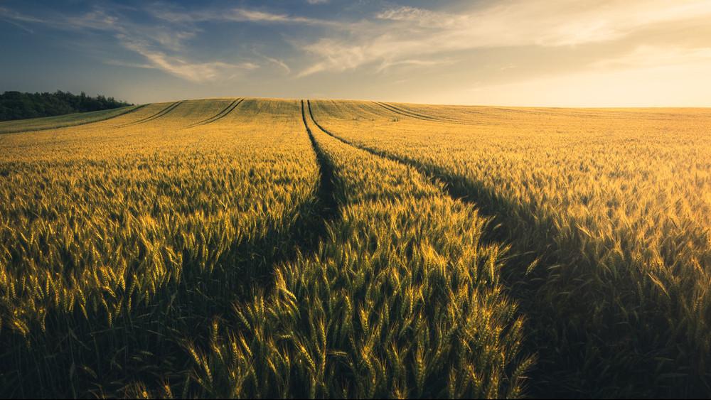 Így segítenék a vidékieket: ingyen földet kaphatnak a hátrányos helyzetűek