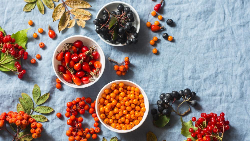 Kvíz: Te felismered az ehető és mérgező bogyókat? Itt a nagy őszi bogyóhatározó!