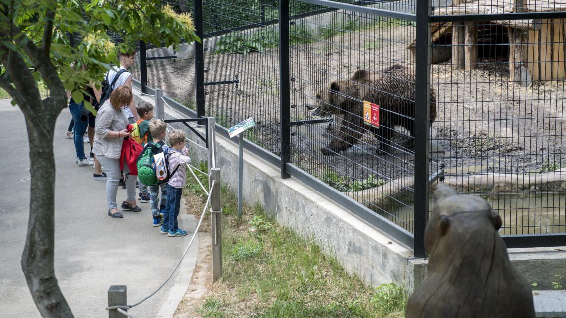 Hatalmas elismerésben részesült a Pécsi Állatkert: új, ritka állatfajok várhatóak!