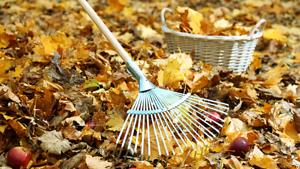 Ne halogasd: ezt a 8 kerti munkát végezd el, mielőtt fagyni kezd!