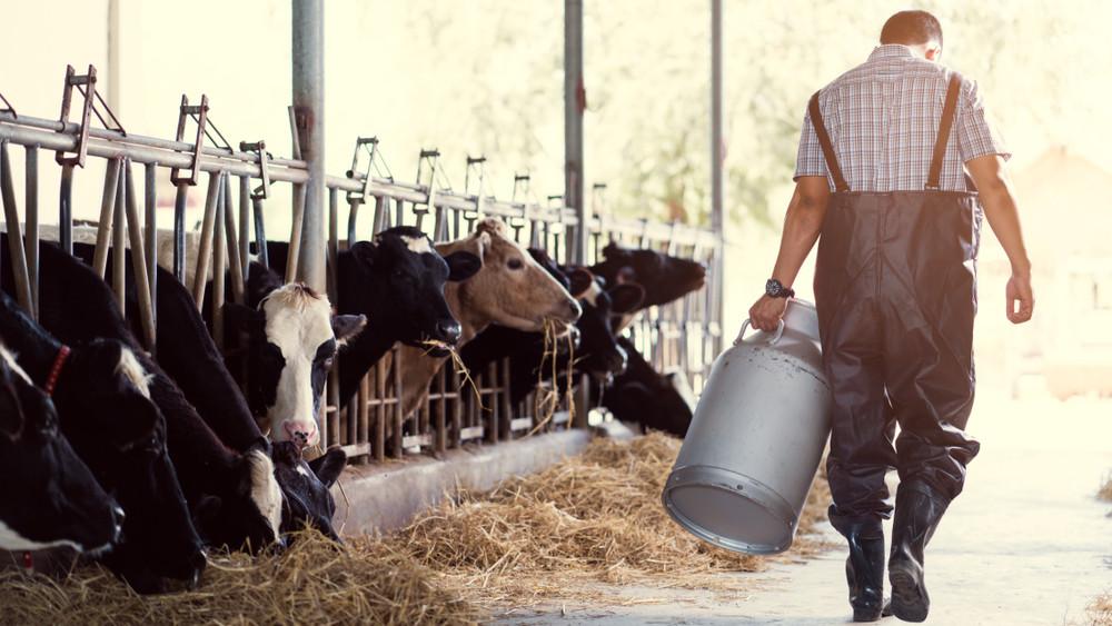 Drágulást hoz az ősz: egekbe szállhat a tejtermékek ára