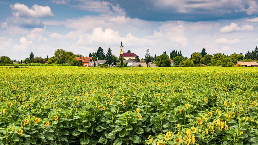 Négymillió földtulajdonos országa vagyunk: ezért nagy gond, hogy elaprózódnak a földek
