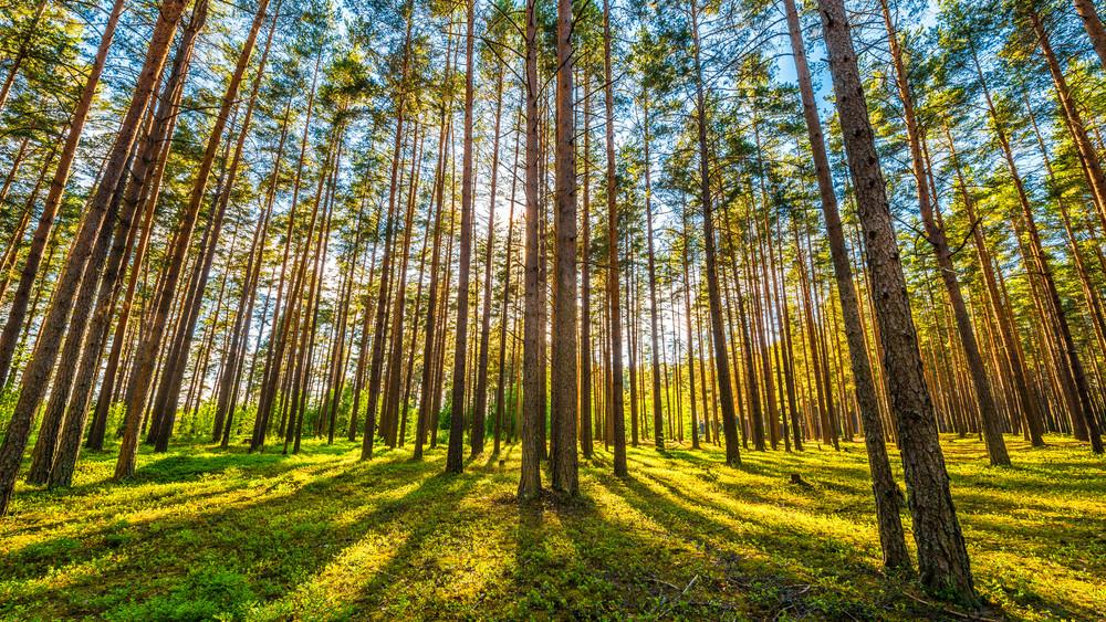 Indulhat az erdősítés: rengeteg pénz jut faültetésre