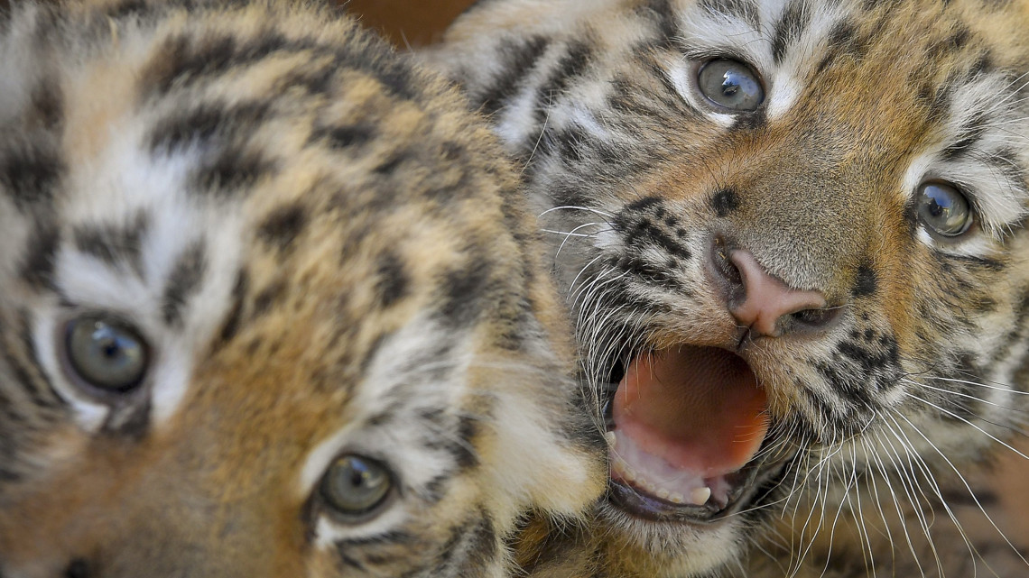 Ezt ne hagyd ki: elkezdődött az Állatok Hete a Debreceni Állatkertben!