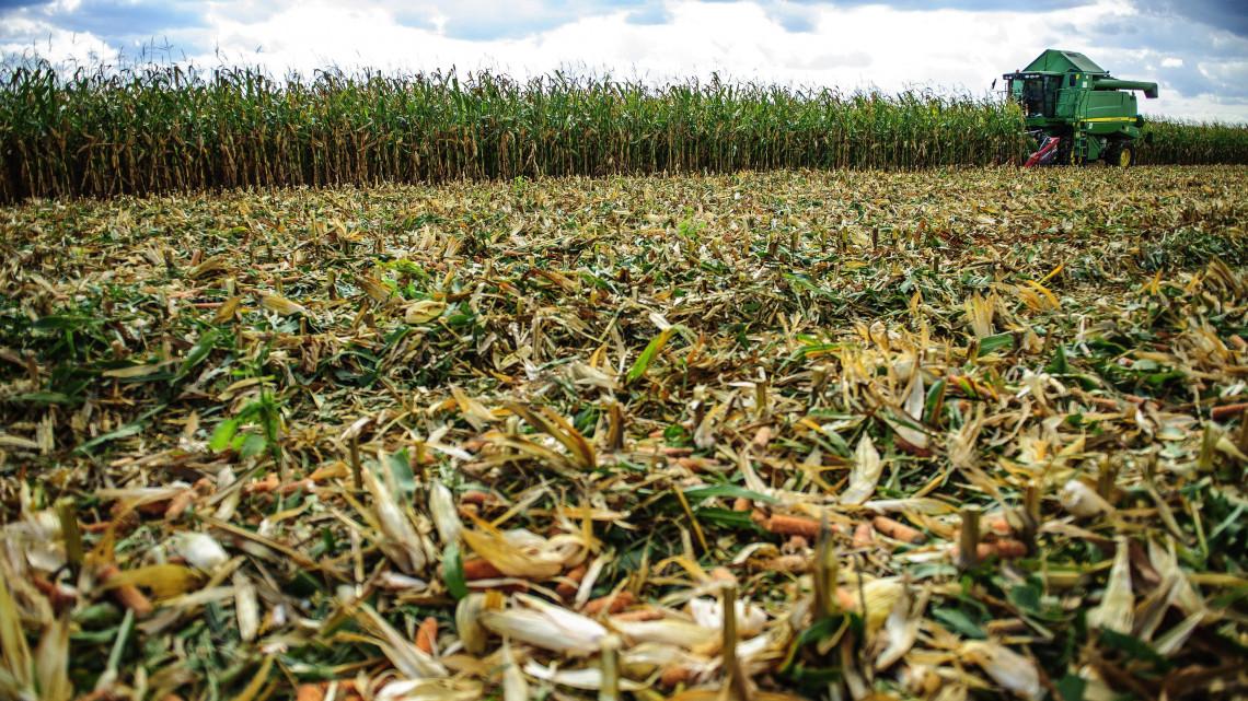 Jónak ígérkezik az őszi termés: elkezdődött a betakarítás