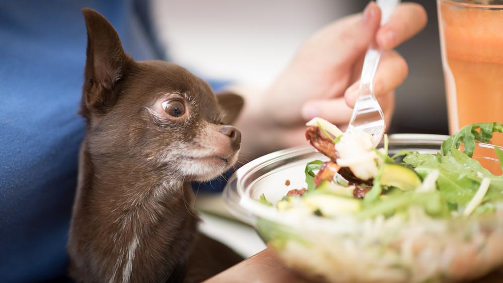 Gyilkos kór tizedeli a kutyákat: ezzel etesd kedvencedet, hogy megússza