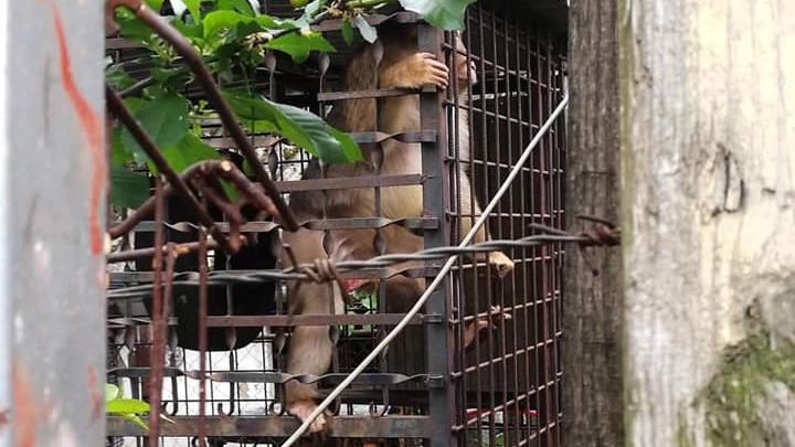 Ilyen nincs: makákót tartottak házi kedvencként egy csongrádi kocsmában