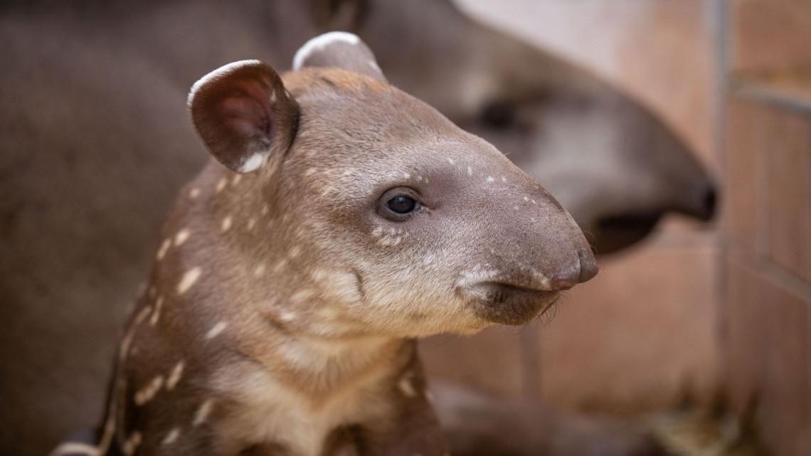 Felrobbant a cukiságbomba a vidéki állatkertekben: fotókon az új jövevények