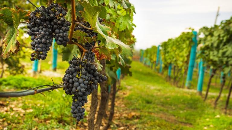 Itt az új magyar szuperélelmiszer: jobb, mint egy pohár vörösbor