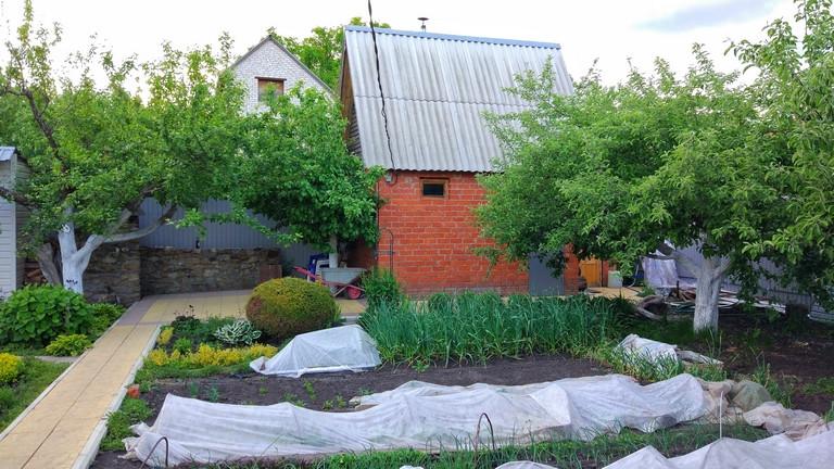 Védd meg a kerted a hívatlan vendégektől: ezen a 6 sövényen semmi sem jut át!