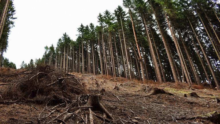 Kiadták a vészjelzést: drasztikus változás vár Európa erdőire, minden megváltozik