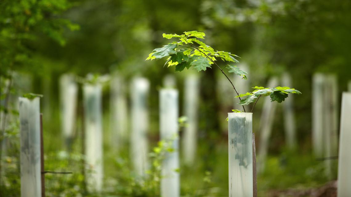 Nagyszabású erdősítés indul: minden eddiginél jelentősebb fásítási program kezdődik