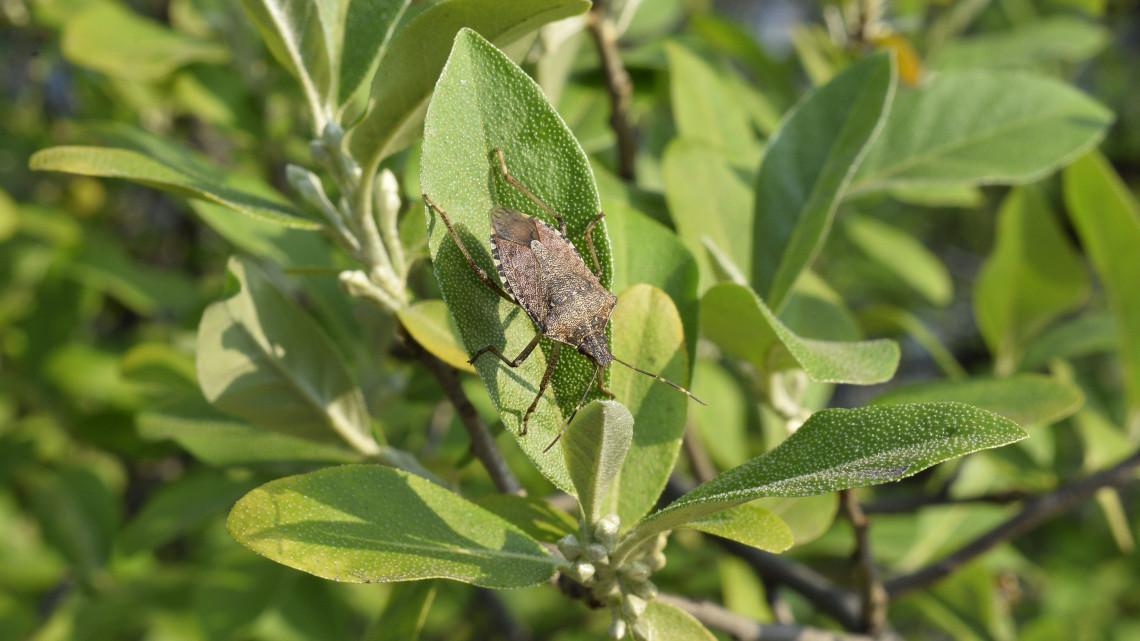 Szigorú rendelet született: az EU keményen fellép az idegen rovarfajok ellen
