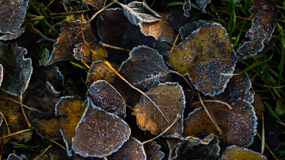 Bedurvult az ősz: ebben a faluban dőlt meg a napi hidegrekord