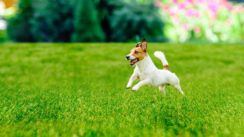 Beváltak a benzinkutas mikrochip-leolvasók: több mint 300 kutya talált már haza