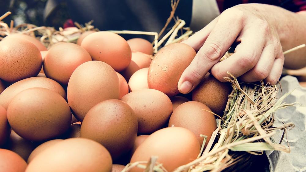 Kiderült az igazság: tényleg jobb a szabadtartásból származó tojás?
