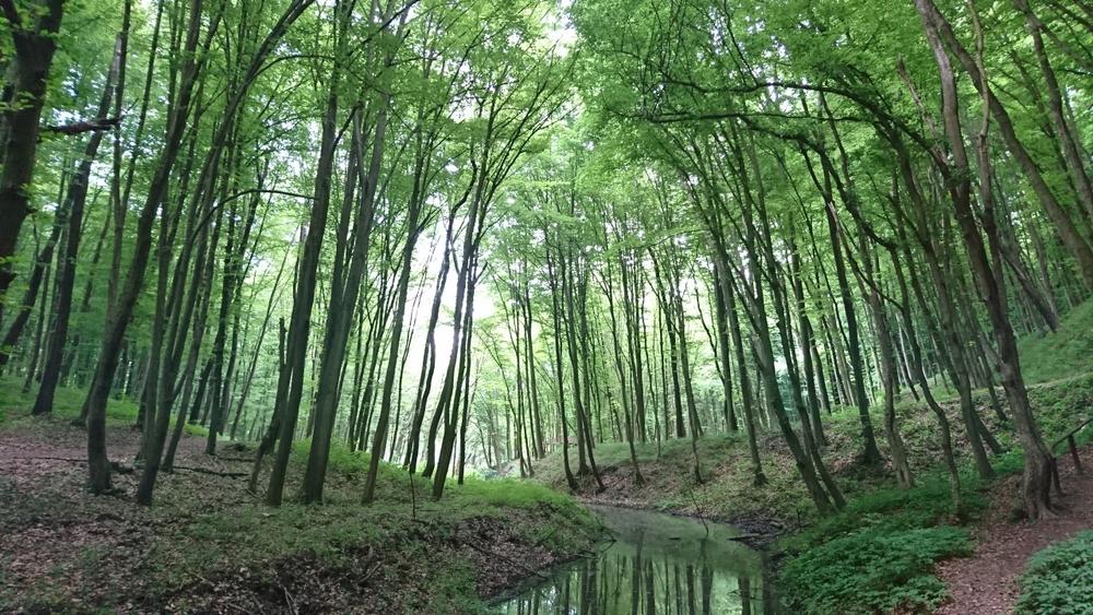 Több erdőt a magyar földre: nőtt az erdőtelepítésre adható támogatás!