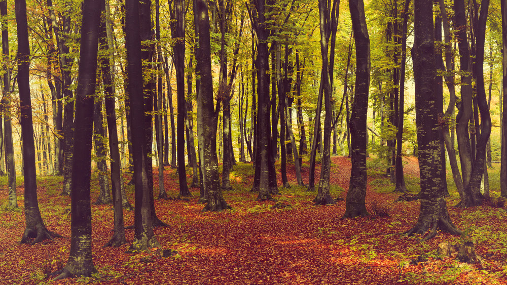 Erdőtelepítés Csongrád megyében: akáccal és nyárfával bővülnek az erdők
