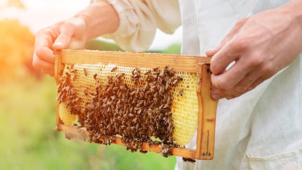 Csalódottak a gazdák: kevesebb lett a méz idén
