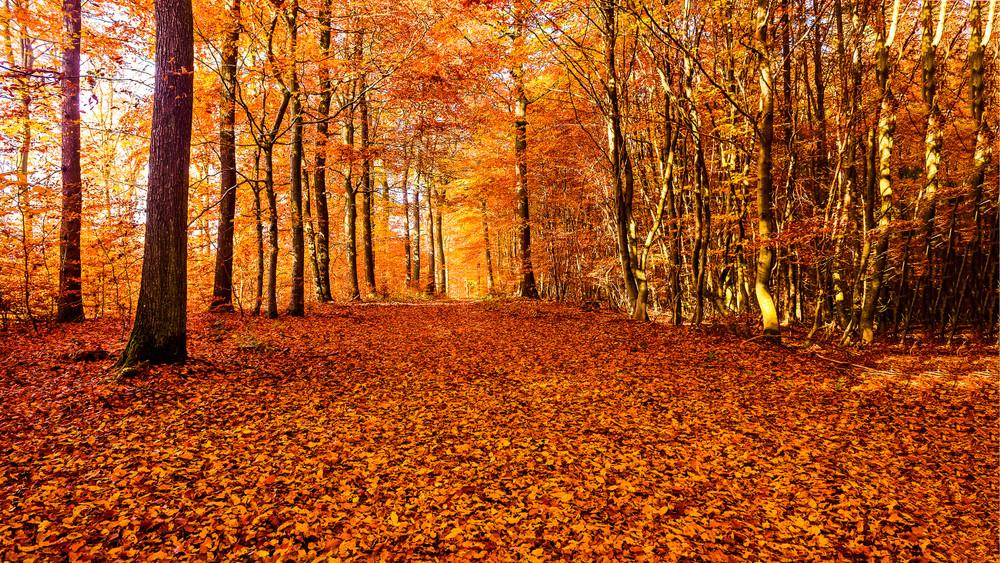 Folytatódik a facsemeték ültetése: így növelhető a magyar erdők területe