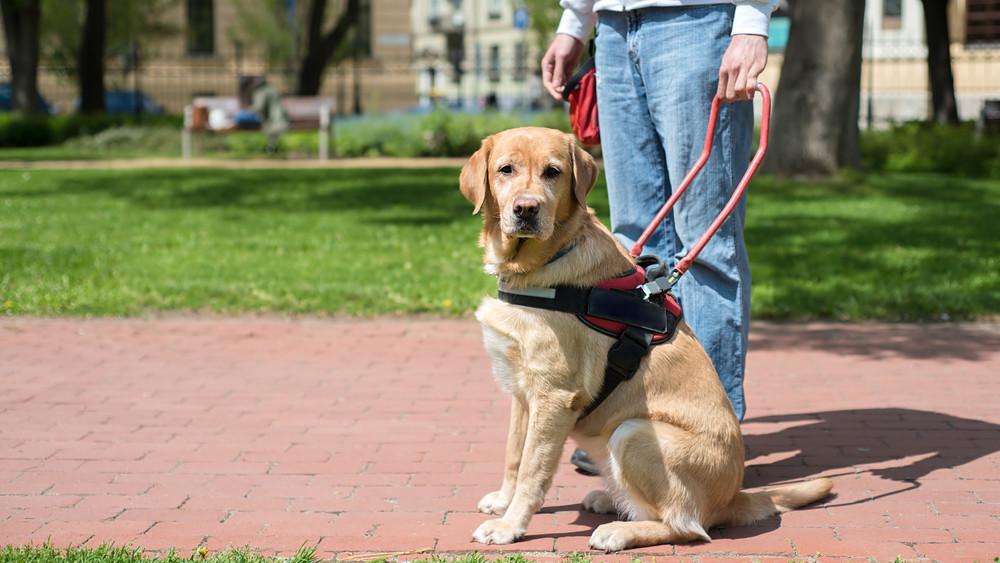 Mindössze párszáz ilyen kutya van Magyarországon: pedig igény az lenne rá