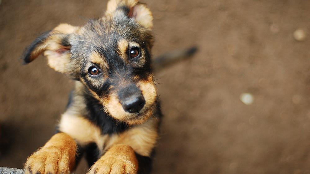 Program az állatokért: így csökkentenék a kóbor kutyák számát
