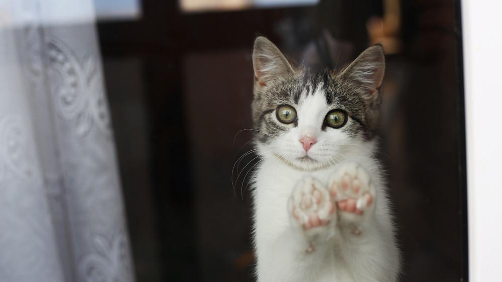 Nem hétköznapi vészhelyzet: macskát mentettek a rendőrök