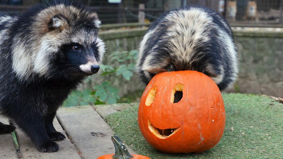 Bátorságpróba Halloween éjszakáján: borzongató programokkal várnak a Budakeszi Vadasparkban