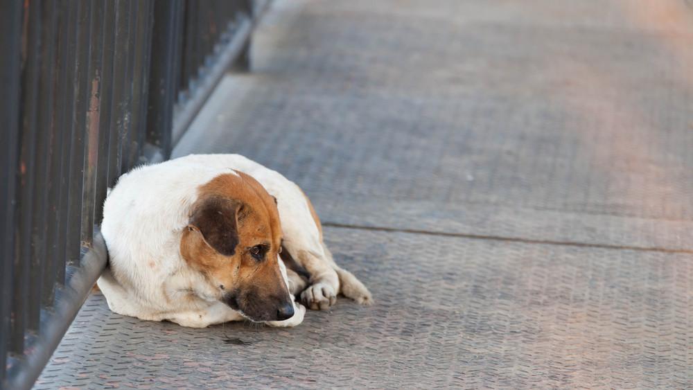 Elkeserítő adatok: ennyit költ évente egy menhely a kutyákra