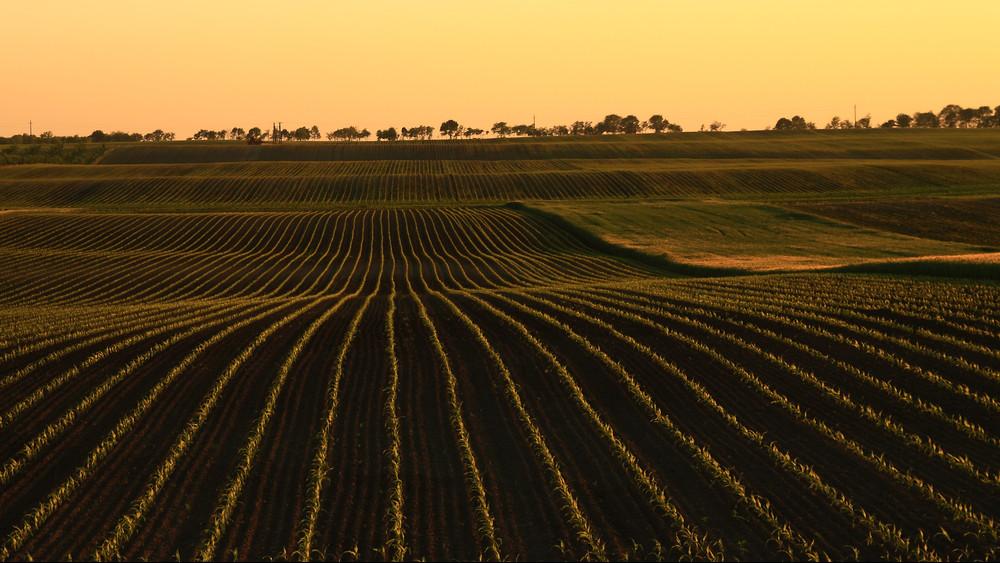 Még több pénzt öntenének a mezőgazdaságba: itt vannak a részletek