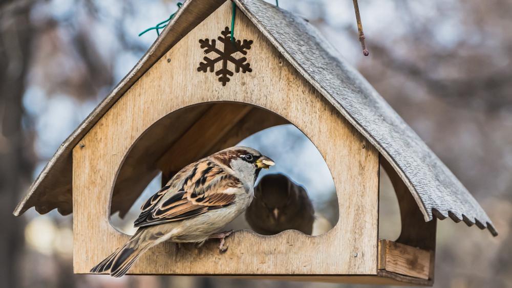 Ezt sokan elrontják: csak így szabad madáretetőt kirakni télire a kertbe!